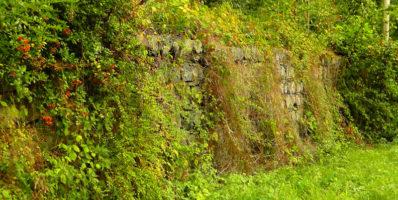 Aide à la plantation de haies bocagères et à la création de talus