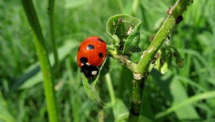 Comment accueillir la biodiversité chez soi ?