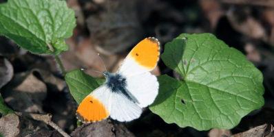 Comment faire perdurer les bienfaits du confinement pour la nature?