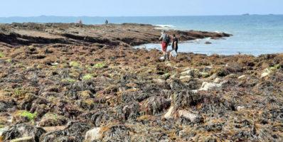 Observatoire de la pêche à pied de loisir : appel à bénévoles