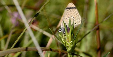 Quand une soucoupe volante vient au secours d'un papillon